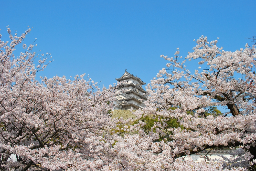 Osaka castle and its grounds