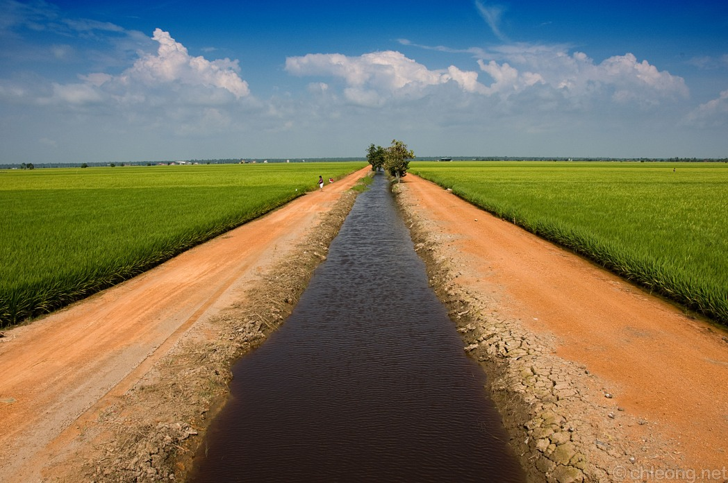 Vast rice fields bisected by a stream